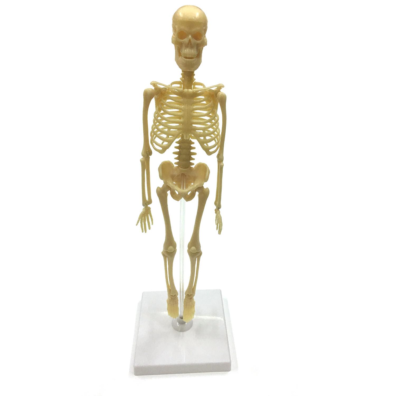 Фото - Наборы для творчества ND Play Скелет человека конструктор nd play автомобильный парк 265 608